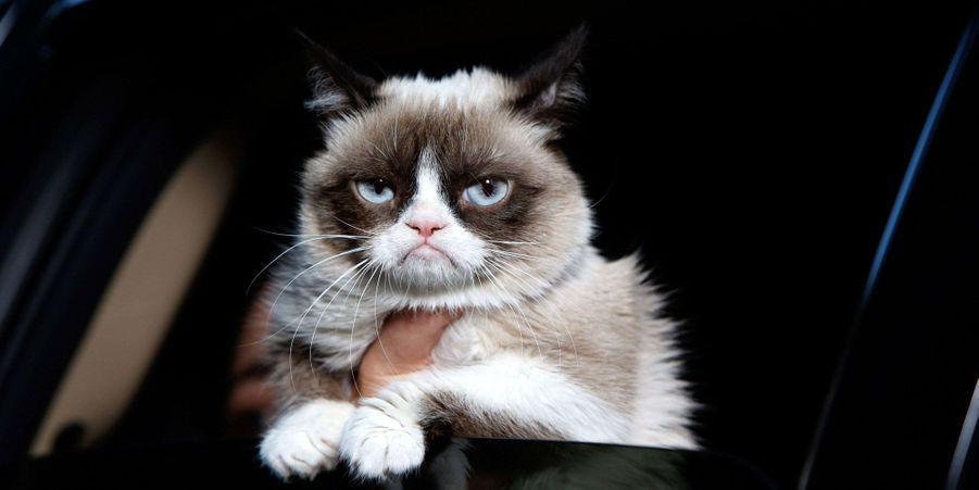 Le film avec Grumpy Cat