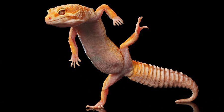 Ces animaux ont le rythme dans la peau