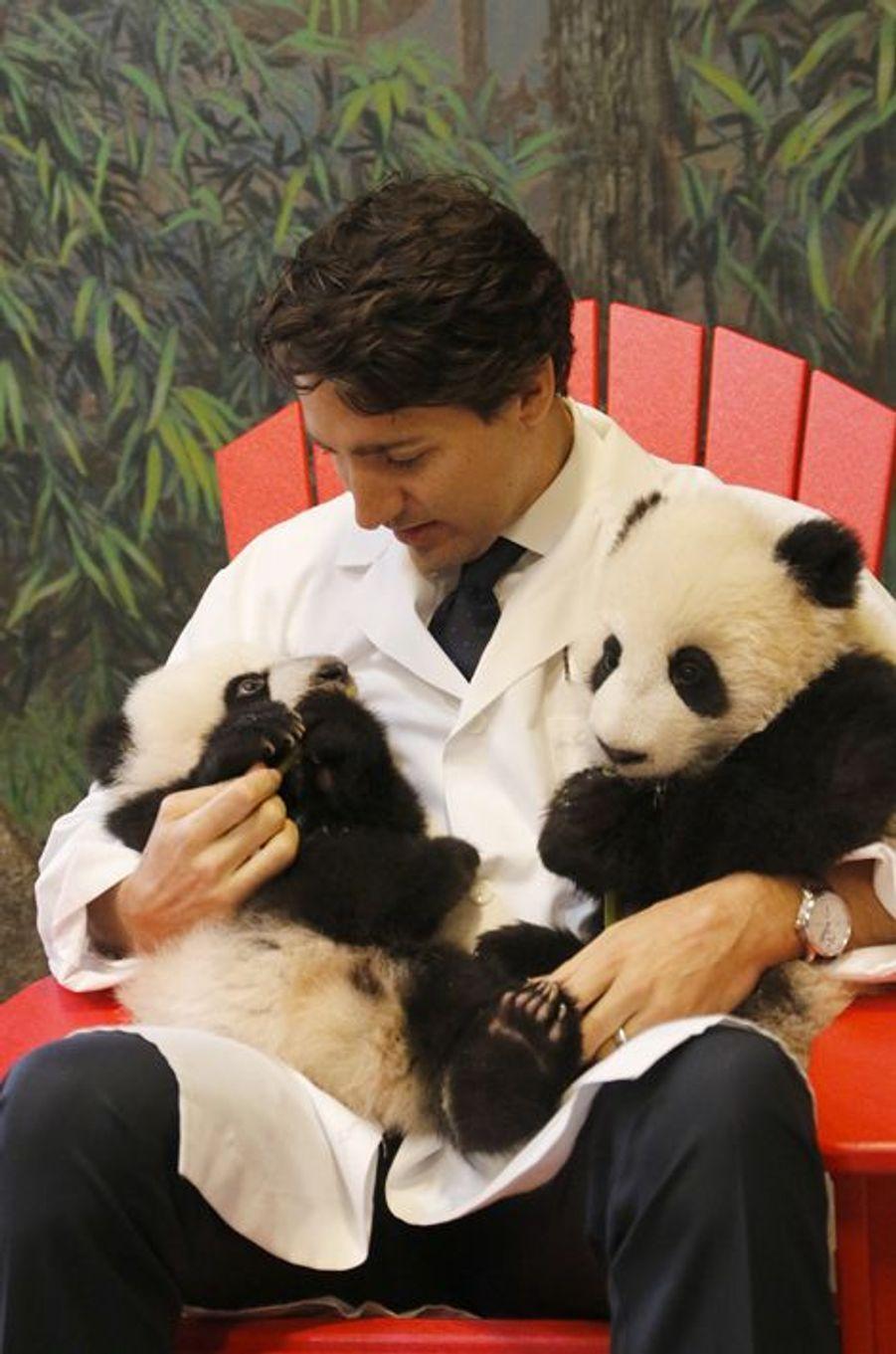 Le Premier ministre canadien Justin Trudeau a rencontré les bébés pandas du zoo de Toronto, le 7 mars 2016