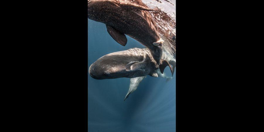 Naissance d'un baleineau:Une de mes expériences les plus incroyables. Je me suis trouvé par hasard au milieu d'une «baleines party». Une mère venait de donner naissance à un baleineau et elle le montrait à toutes ses copines. Y compris à nous!Un moment magique.