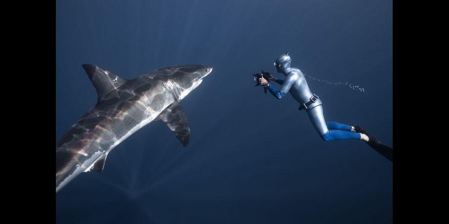 Le requin blanc:En 2007, j'ai eu l'opportunité de rencontrer en pleine eau un grand requin blanc. J'ai tenté cette expérience avec des gens beaucoup plus aguerris que moi, pour apprendre. Quand je l'ai vu à une douzaine de mètres, pendant une seconde, je me suis demandé ce que je faisais là. Et puis très vite, j'ai vu en lui, non pas le tueur sanguinaire, mais un animal aussi curieux et prudent que moi. Le Grand requin blanc est un véritable marathonien des mers, capable de parcourir 20 000 km en une année.