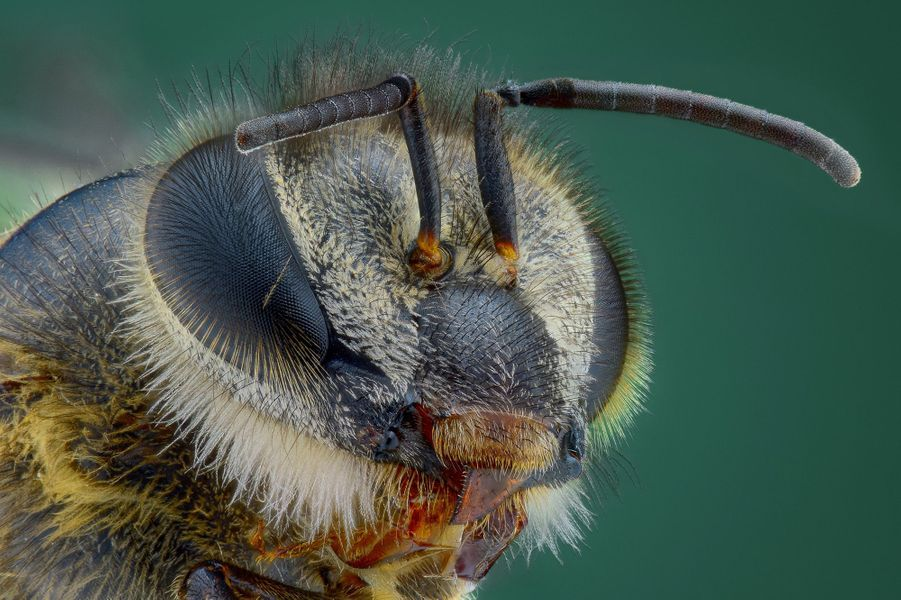 La beauté cachée des insectes