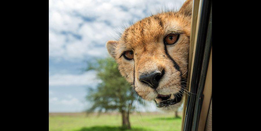 Le bêtisier de la photo animalière