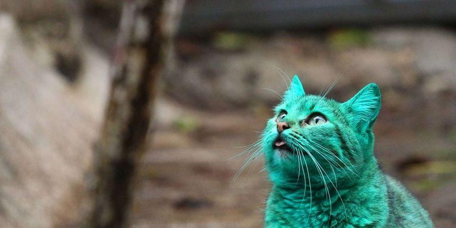 Le chat de Varna lorsque son pelage était encore bien vert, en décembre dernier