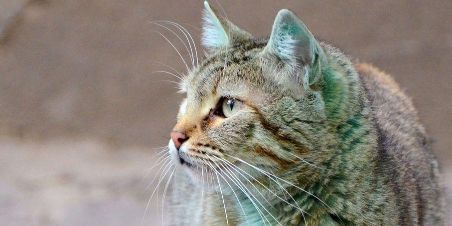 Le chat de Varna n'est plus si vert
