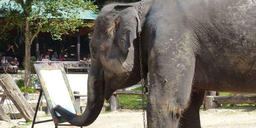 """Les éléphants """"peignent"""" au sein d'un parc qui leur est dédié"""