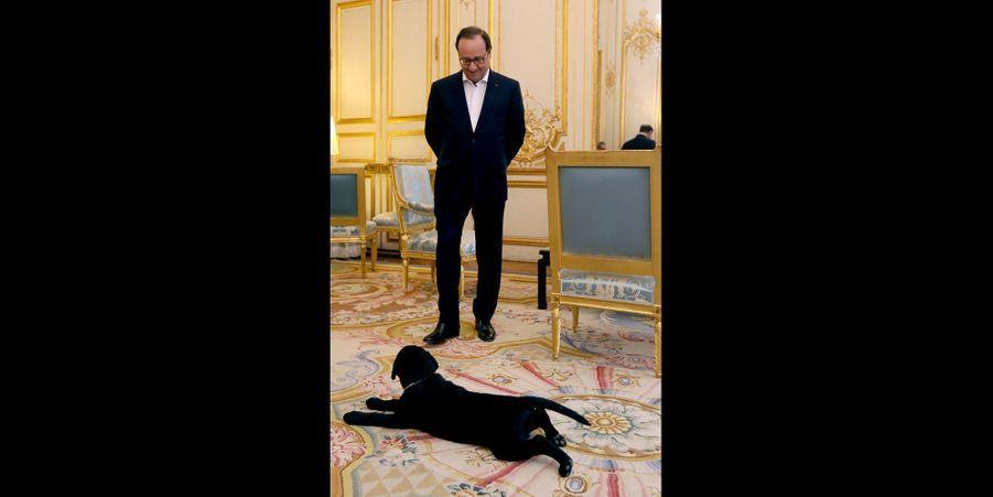 Philae, le labrador de François Hollande