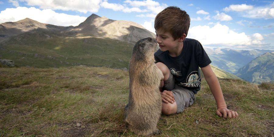 Matteo, 11 ans, a été adopté par un groupe de marmottes