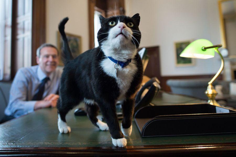 Palmerston, le chat du Foreign Office accusé d'être un espion envoyé par la Commission européenne.