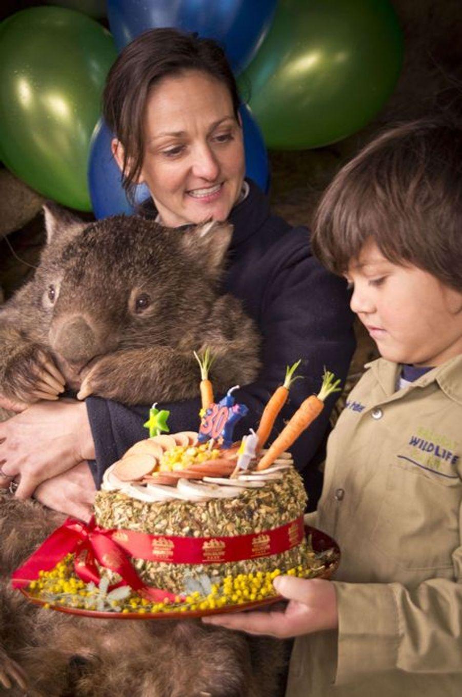 Patrick le wombat a 30 ans