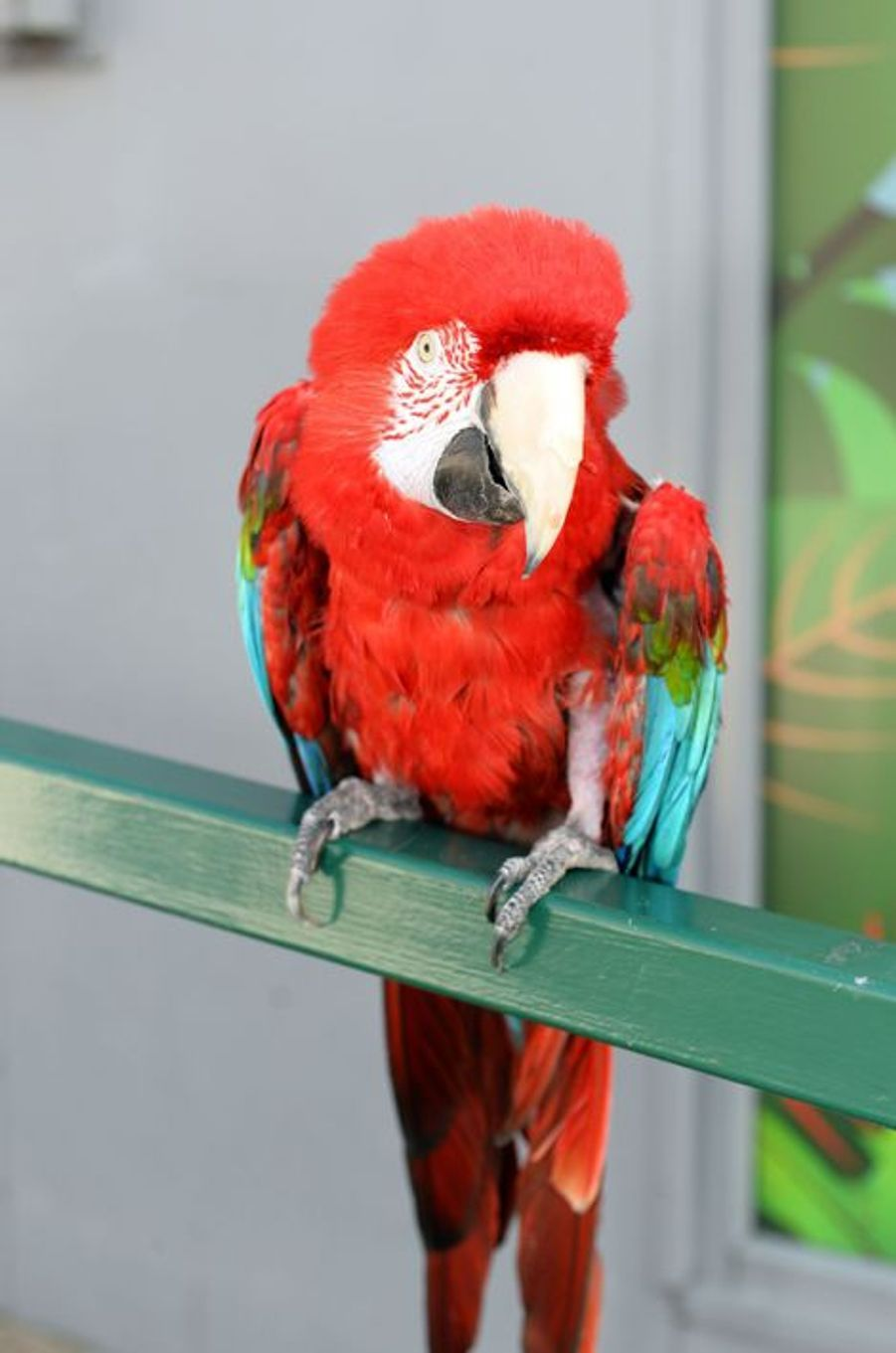 Poncho le perroquet fête ses 90 ans