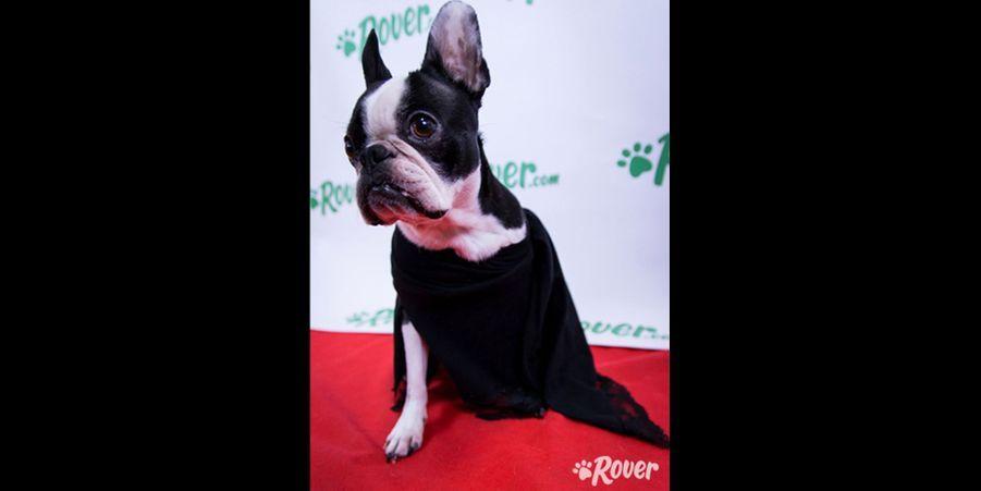 Gus imite Angelina Jolie aux Oscars en 2012