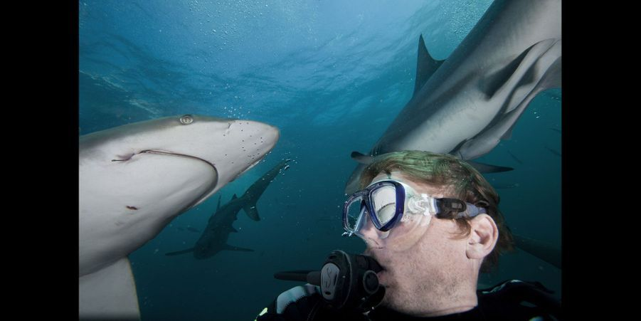 Selfie parmi les requins