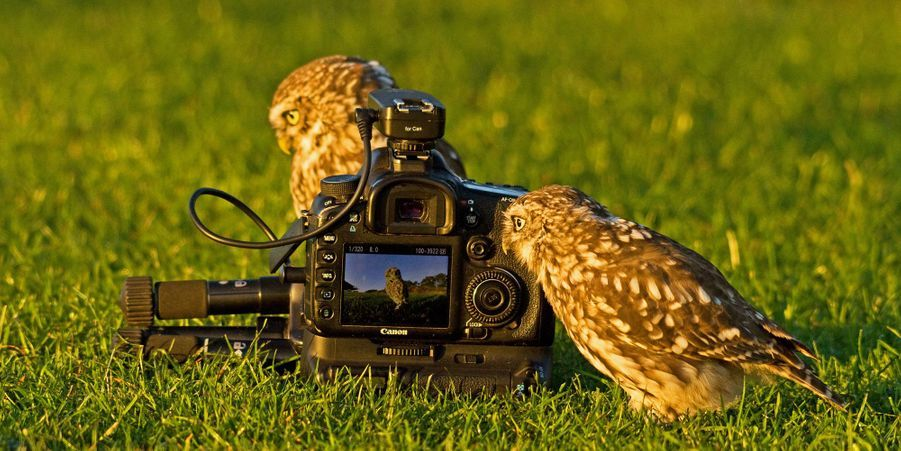 Chasseurs d'images