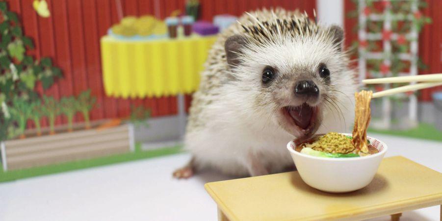 Turbo, le mini-hérisson star d'Instagram