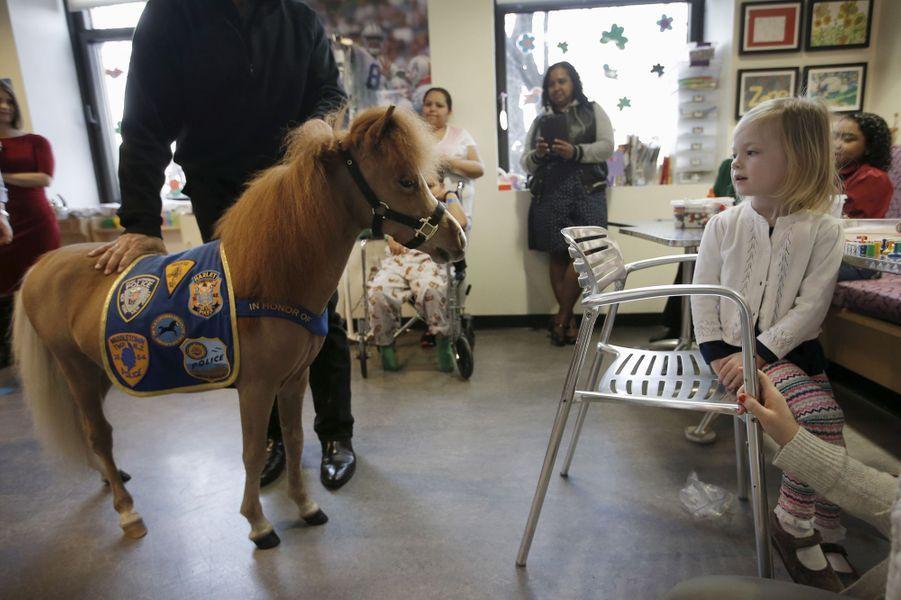 Un mini cheval pour aider les personnes hospitalisées
