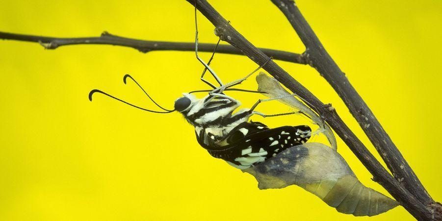 Attribuez une à cinq étoiles aux diaporamas de la semaine:L'incroyable moment où la chenille devient papillon:La transformation a duré cinq minutes, avant que leVoilier échiquier ne s'envole.La danse du harfang des neiges: Un photographe a immortaliséla curieuse danse d'un harfang des neiges qui était en pleine chasse.L'oursonne du Marineland a un nom:Quatre mois après sa naissance, l'oursonne polaire du Marineland d'Antibes a un prénom: Hope.L'improbable amitié d'un tigre et d'un faon:Au lieu de ne faire qu'une bouchée de ce jeune faon, un tigre a décidé de… jouer avec.Sortie printanière pour les petits guépards:Les quatre petits guépards nés en novembre dernier au zoo de Prague, en République Tchèque, ont profité des premiers rayons de soleil du printemps pour pointer le bout de leur nez.Première présentation pour le petit gorille:Le zoo de Melbourne a fièrement annoncé l'arrivée, début mars, d'un bébé gorille. Il s'agit du premier petit de cette espèce depuis 15 ans.Bienvenue dans la garderie pour chiens:A l'inverse des établissements où les animaux sont traditionnellement évités, le Dog Resort est uniquement réservé... aux chiens.Le mystère des lionceaux abandonnés:Mardi matin, les employés du Parc des Félins ont eu une surprise devant l'entrée du parking: la présence de deux lionceaux, enfermés dans une cage.