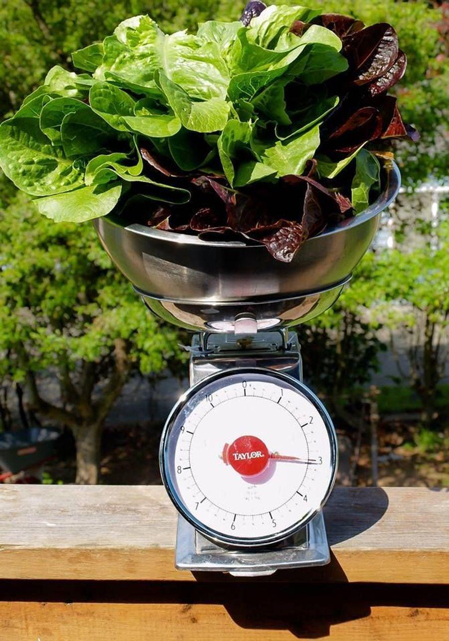 Hailey Ford espère cultiver 110 kilos de légumes avant la fin 2015.