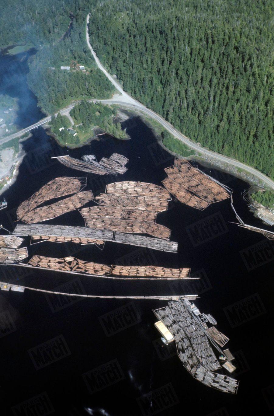 « Sauf au Grand Nord, où le sol, gelé jusqu'à 300 mètres de profondeur, ne dégèle l'été qu'en surface (permafrost), la forêt est partout : décor des livres de Jack London et de Curwood. C'était, avant la découverte du pétrole, une des deux grandes richesses de l'Alaska (l'autre étant la pêche). Le seul moyen de transport est évidemment le flottage, puisque le pays n'a ni route ni chemin de fer. Le flottage peut durer des semaines au travers des fjords (la longueur de côtes de l'Alaska est supérieure à celle des 49 autres Etats américains). Le bois est traité dans des usines pour faire de la pâte à papier. Certaines sont japonaises et fabriquent ici le célèbre papier japon. » - Paris Match n°1063, 20 septembre 1969