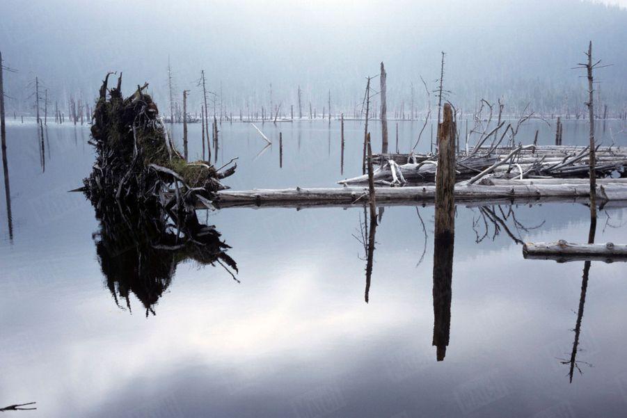 « Noyer la forêt coûte moins cher que la couper : La mise en eau d'un barrage a noyé cette forêt, tuant les arbres qu'on a même pas pris la peine de couper. » - Paris Match n°1063, 20 septembre 1969