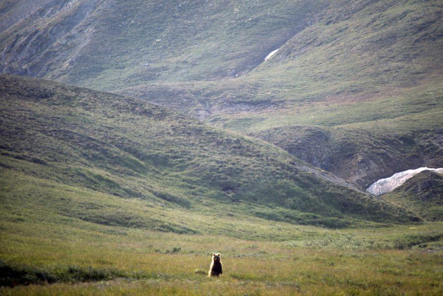 « Les rigueurs du climat, en éloignant pendant des siècles de l'Alaska l'homme civilisé, destructeur de la nature, ont fait du pays une réserve naturelle de la vie sauvage. Les Indiens nomades ne pouvaient pas plus venir à bout des élans orignals, des ours bruns facétieux et des dangereux grizzlis que les Esquimaux des ours blancs et des phoques.» - Paris Match n°1063, 20 septembre 1969