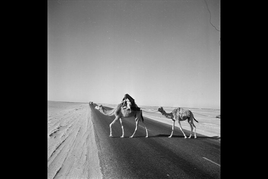 Des chameaux traversant une route dans le désert