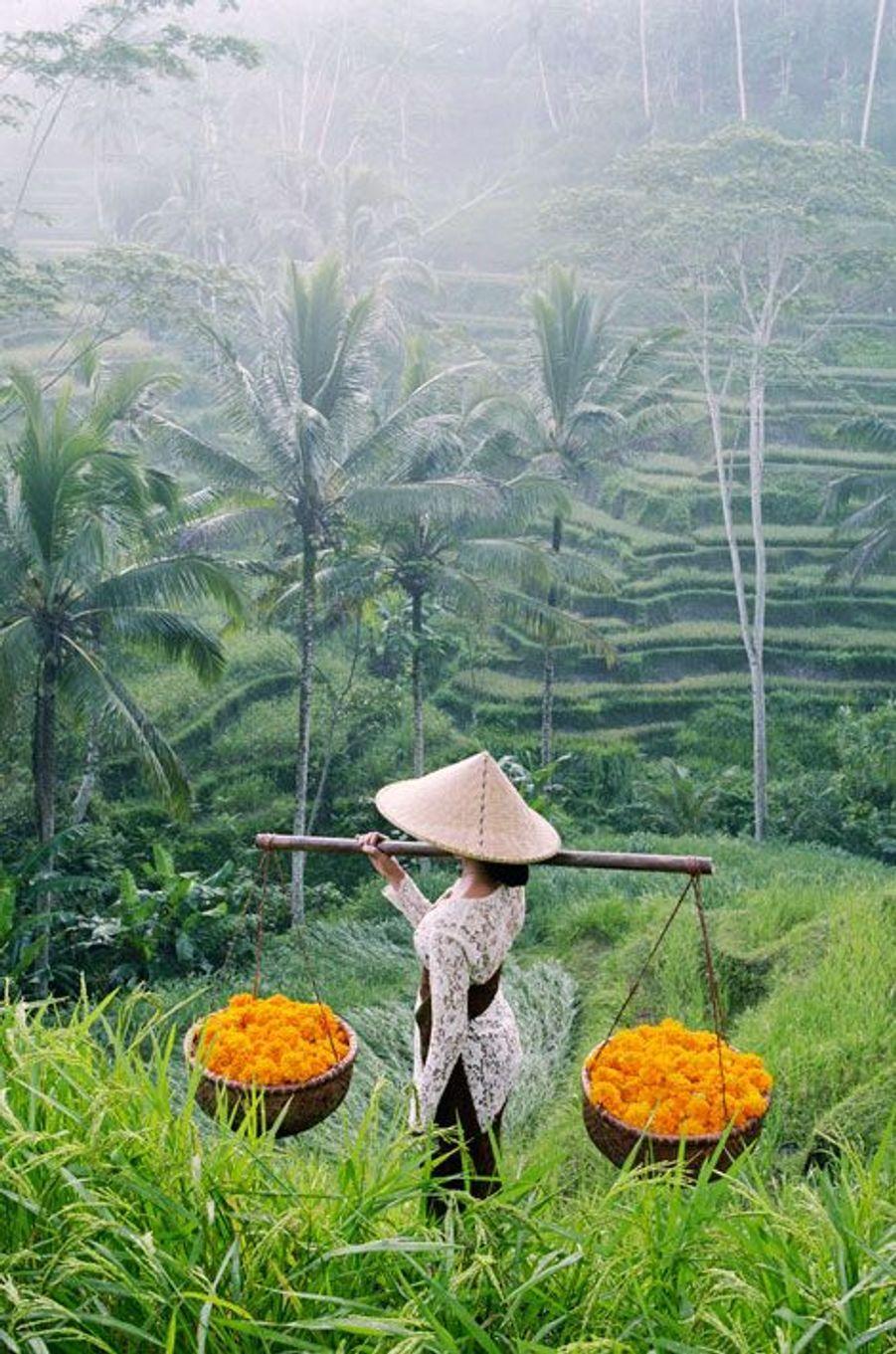 Une femme dans les rizières