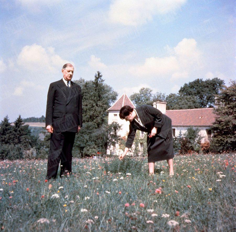 « Un pré s'étend devant la maison, couvert de fleurs sauvages. Mme de Gaulle y cueille chaque jour un bouquet. » - Paris Match n°288, 2 octobre 1954