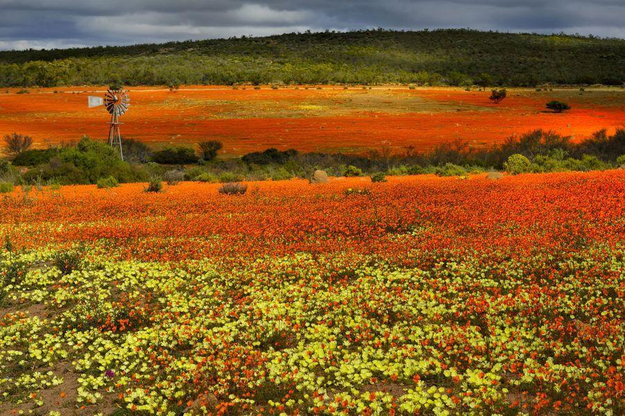 Namaqualand, en Afrique du Sud