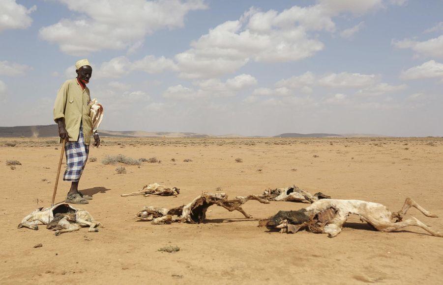 El Niño: la sécheresse tue en Somalie