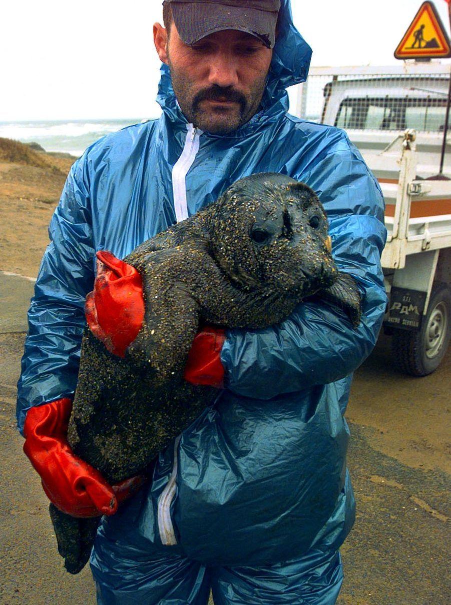 Un phoque, victime de la marée noire provoquée par le naufrage du pétrolier Erika, en décembre 1999.
