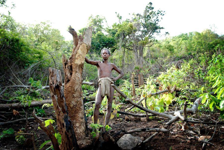 Kolu, de la tribu des Dongria Kondh, sur les basses pentes boisées des collines de Niyamgiri en Odisha du sud, Inde. Les Dongria Kondh s'autodénomment Jharnia, ce qui signifie ʻprotecteurs des torrents', en référence au fait qu'ils sont depuis longtemps les gardiens des montagnes qui s'élèvent dans les forêts épaisses de l'Orissa et de leurs rivières nourricières. Les Dongria Kondh se sont récemment opposés au géant minier Vedanta Resources qui a l'intention d'exploiter une mine à ciel ouvert sur leur territoire. La mine détruira la montagne sacrée de la tribu et avec elle, leur mode de vie et leur identité en tant que peuple.Nous ne voulons pas partir. Nos ancêtres ont vécu ici depuis des générations. Je ne sais pas ce qu'il adviendra quand je serai mort, mais tant que je serai en vie, Vedanta ne pénétrera pas dans ce village, a déclaré un Dongria Kondh.