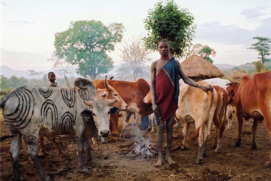 Un Mursi devant son troupeau de bétail dans la vallée inférieure de l'Omo en Ethiopie. Le bétail est le bien le plus précieux de la tribu des Mursi. Les peuples agro-pastoraux vivent avec leur bétail le long de la vallée inférieure de l'Omo depuis des millénaires. Aujourd'hui, cependant, les terres des Mursi et des autres tribus riveraines sont menacées par la construction d'un barrage hydroélectrique de grande envergure, appelé Gibe III, et par l'octroi de vastes étendues de terres tribales à des compagnies étrangères et des propriétaires terriens pour y exploiter des plantations de coton et de plantes alimentaires et y produire des agrocarburants destinés à l'exportation. Le barrage bloquera la partie inférieure de la rivière, mettant ainsi fin au cycle naturel des crues de l'Omo, ce qui compromettra définitivement les méthodes traditionnelles de culture de décrue. Lorsque l'Omo était en crue, nous avions de grandes quantités d'eau et nous étions très heureux, dit un Mursi.Maintenant, il n'y a plus de crues et nous sommes tous affamés. S'il vous plaît, dites au gouvernement de nous rendre l'eau.