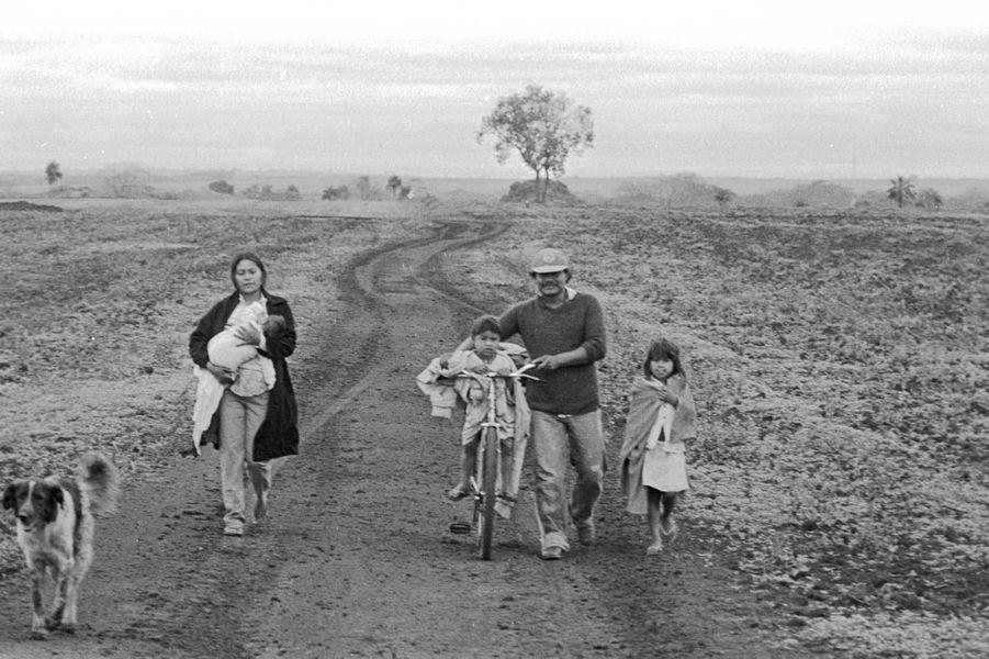 Un Guarani conduit sa famille dans une plantation de canne à sucre qui était autrefois sa terre ancestrale. Pour les Guarani du Brésil, la terre est à l'origine de toute forme de vie. Ils occupaient jadis un territoire de forêts et de plaines d'une superficie de 350 000 km2, mais les violentes invasions des éleveurs ont dévasté leur territoire. Presque toutes leurs terres ont été spoliées. Aujourd'hui, ils sont entassés sur de petites parcelles cernées par des élevages de bétail et de vastes plantations de soja et de canne à sucre. Certains n'ont pas du tout de terre et sont forcés de vivre dans des abris de fortune le long de routes à fort trafic.Laranjeira Nanderu était la terre de mon père, la terre de mon grand-père, la terre de mon arrière-grand-père, a confié un Guarani à Survival. Nous devons y retourner pour pouvoir vivre à nouveau en paix. C'est notre unique rêve.