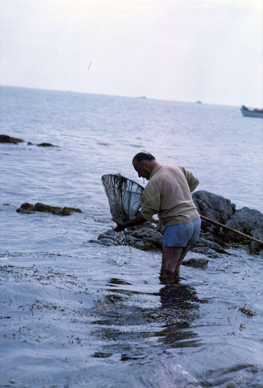 Georges Pompidou en vacances en Bretagne, à la pêche à la crevette avec une épuisette, en août 1965.