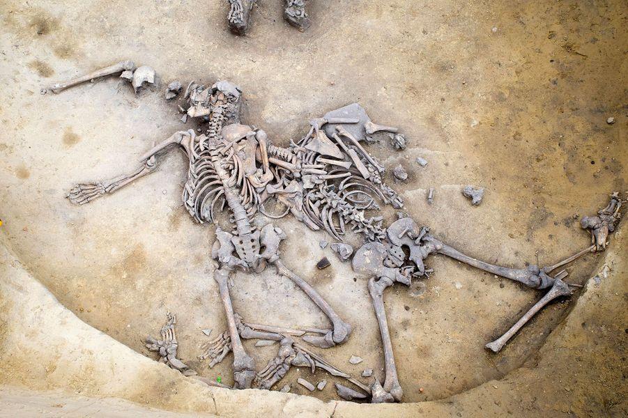 Il y a 6000 ans, un massacre a bien eu lieu en Alsace