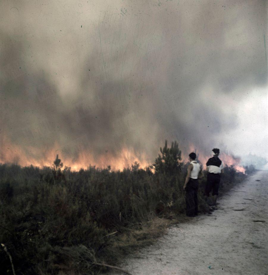 « Ces quatre photos ont été prises en cinq minutes : Les flammes avancent à 70 km à l'heure. Elles passeront sur la route.» - Paris Match n°24, 3 septembre 1949.