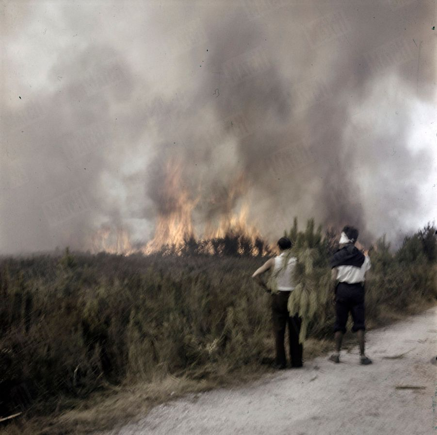«Ces quatre photos ont été prises en cinq minutes : Les volontaires munis de branchages attendent le feu sur la route de Saucats» - Paris Match n°24, 3 septembre 1949.