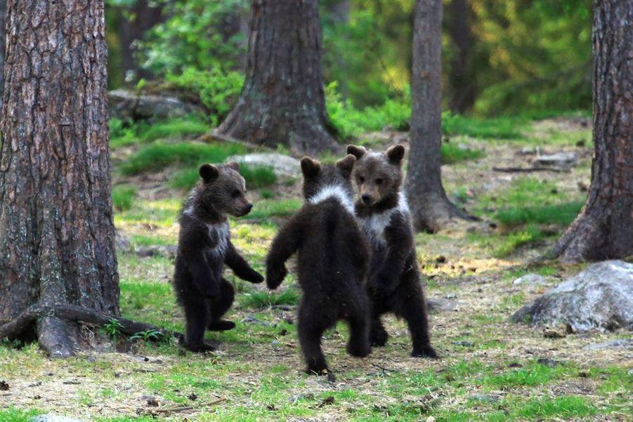 Pour conclure ce diaporama, un peu de poésie avec cette ronde des oursons immortalisée en février dernier.
