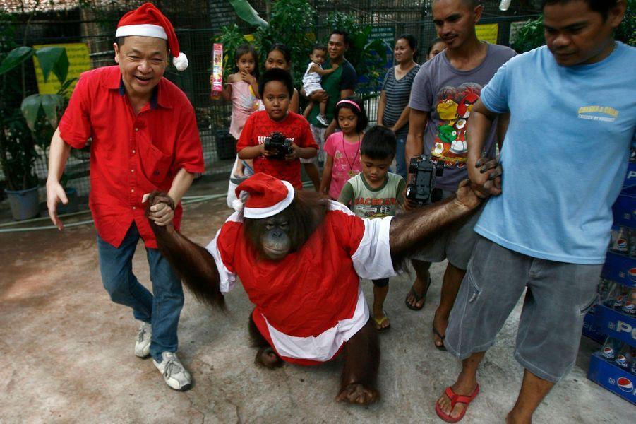 L'orang-outang est descendu de son arbre de Noël