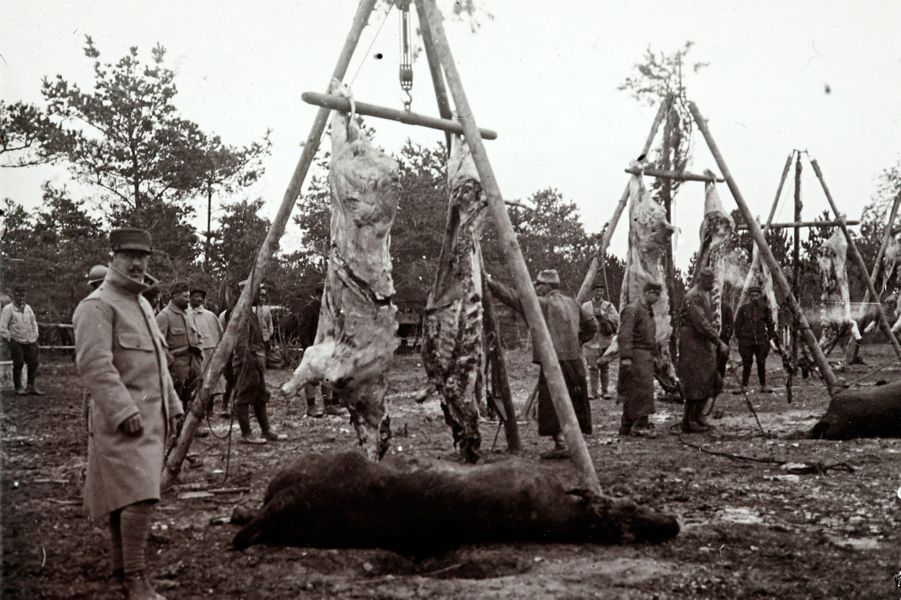 Des carcasses d'animaux sur le point d'être cuisinées par des soldats, sur le front de Champagne.