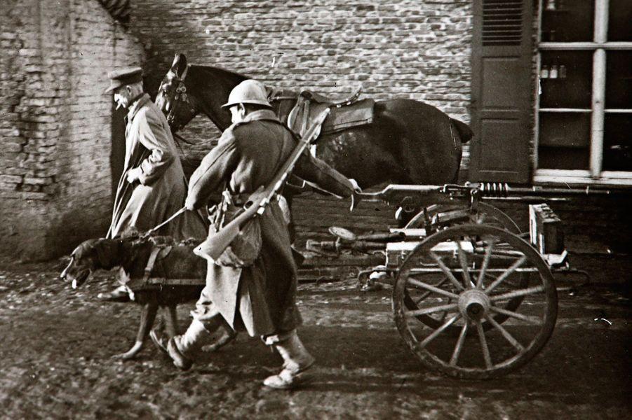 Une photographie non datée d'un chien tirant un chariot et une mitrailleuse belge.
