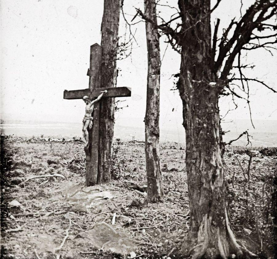 Une croix posée sur un arbre àFricourt, sur le front de la Somme.