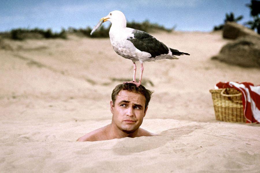 Scène culte des «Séducteurs», un film de 1964, réalisé par Ralph Levy, avec Marlon Brando.