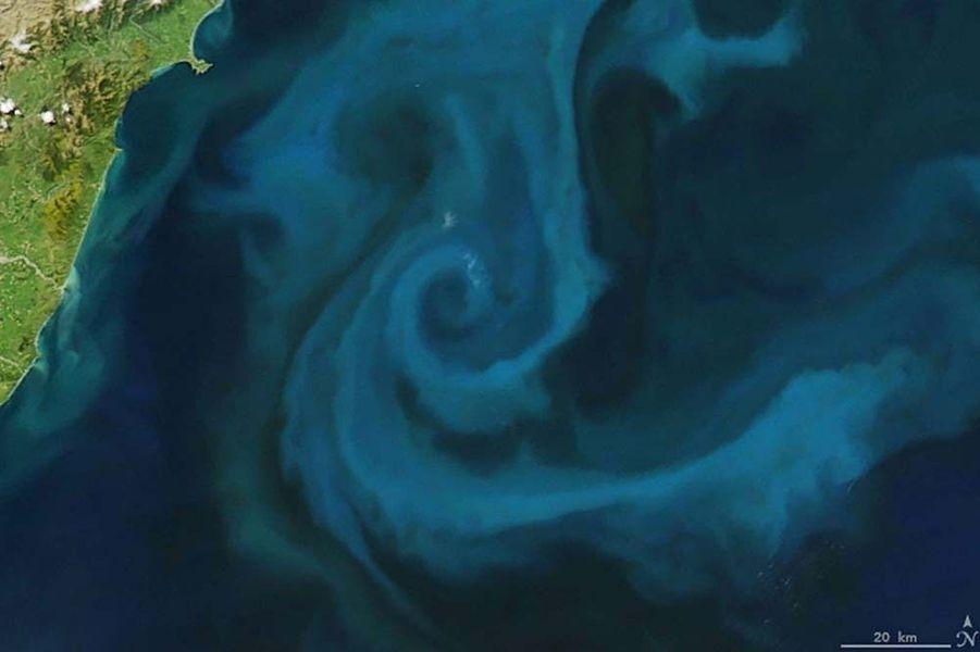 Un banc de planctons au large de la Nouvelle-Zélande forme un e.