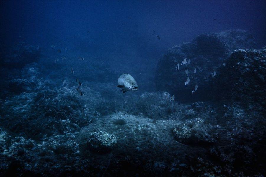 Les ressources halieutiques souffrent de l'activité humaine. Selon une étude de l'Union Internationale pour la Conservation de la Nature (UICN), la surpêche, la dégradation des fonds marins et la pollution menacent plus de 40 espèces de poissons. Plus de 96% des rougets, merlus et crevettes sont surexploités. Les pêcheurs récréatifs causent également énormément de dégâts. Leurs prises représentent seulement 10% des poissons capturés chaque année mais leurs méconnaissances entrainent de terribles dégâts. L'utilisation d'appâts exotiques et le matériel de pêche abandonné, sont autant de sources de pollution pour ce milieu fragile. .../...