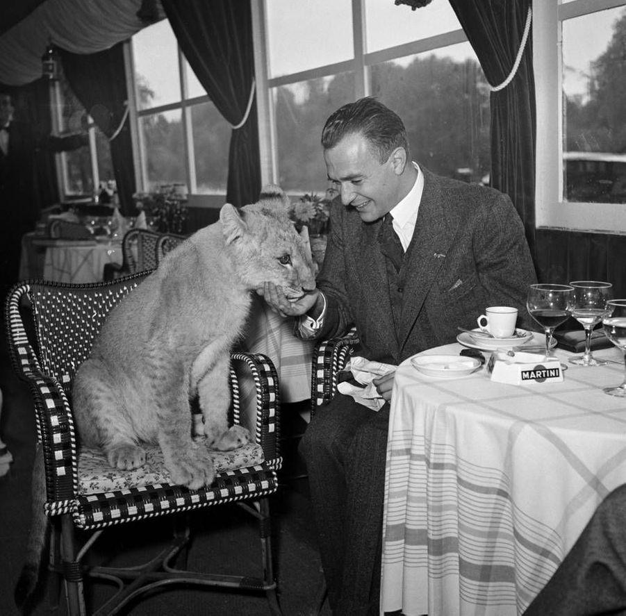 A L'Auberge du fruit défendu à Bougival, Pierre Clostermann, député UDSR, est accueilli par Baï, une jeune lionne de six mois. 1950.