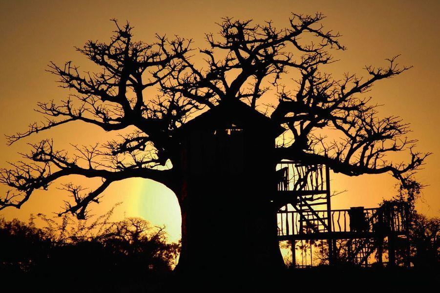 En pleine brousse, au sud de la très touristique Petite Côte, le Lodge des collines de Niassam est posé sur un vaste site du delta du Saloum, entre mangrove et lagune. L'ambiance. Cases en bois sur pilotis, en terre brute, cabane perchée dans un baobab… Les treize habitations, au confort rustique (l'eau chaude est servie dans des seaux), ont un impact minimum sur l'écosystème. Le vrai luxe : la vue depuis sa terrasse, l'immersion dans un environnement naturel extraordinaire. On aime. La sensibilisation des hôtes à la protection de la faune et du milieu ; le contact avec les habitants des rives du fleuve ; naviguer en pirogue sur le Saloum ; goûter les huîtres de palétuvier. A partir de 65 euros* chez Fleuves du monde, spécialiste des croisières fluviales sur des bateaux de caractère. Forfait depuis Paris : 1 235 euros (6 nuits, vols, transfert privé depuis Dakar). Fleuves-du-monde.com.