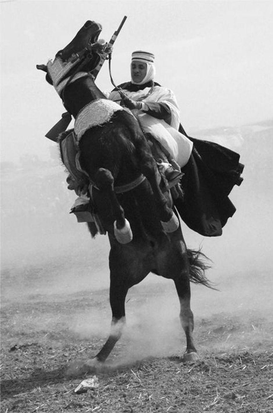 """Fantasia"" Ain Larbaa, Wilaya de Ain Temouchent le 1er novembre 2015"