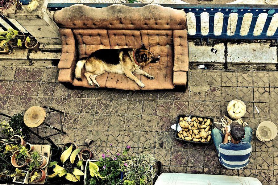 """""""Vie de chien"""" Bejaia, 2014"""